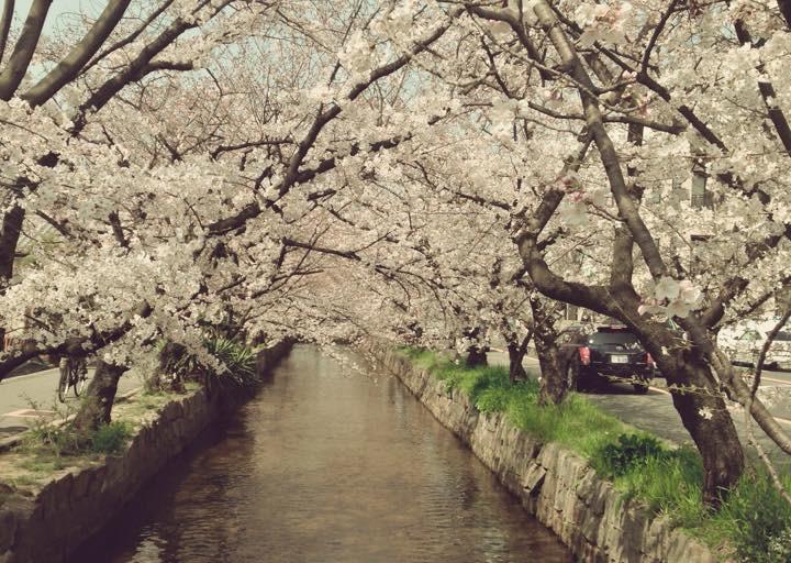 玉串川沿い3