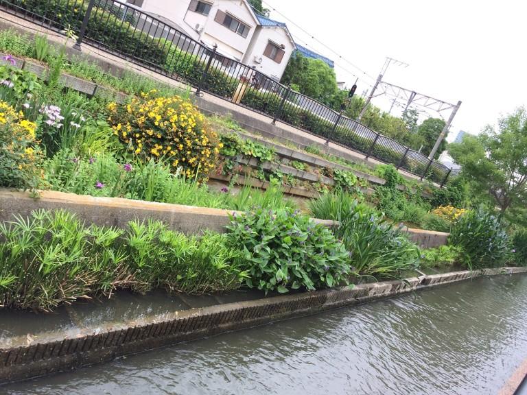 長瀬川沿い
