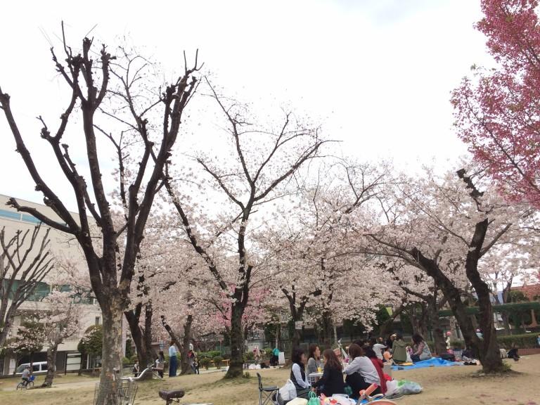 桜の季節のかいじゅう公園